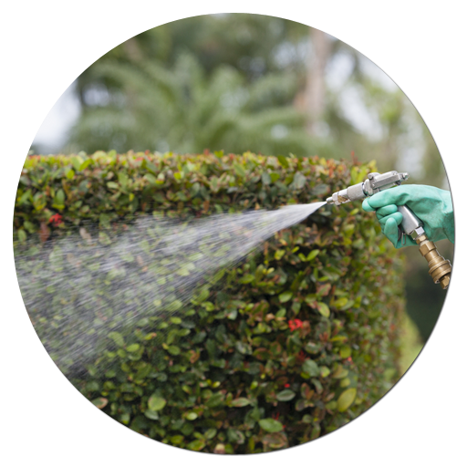 Pest Treatment and Maintenance